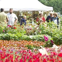 Orticolario al via: folla e hotel pieni  per la festa di fiori e giardini