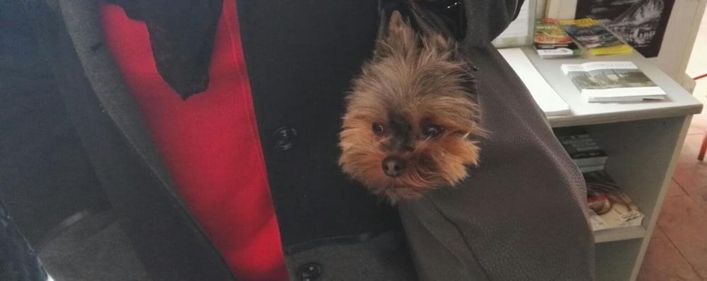 Villa Manzoni vietata ai cani Anche se nella borsa
