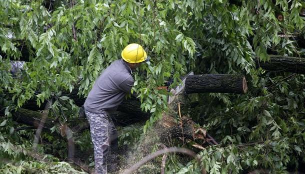 Maltempo: albero si abbatte su un furgone, due uomini in prognosi riservata