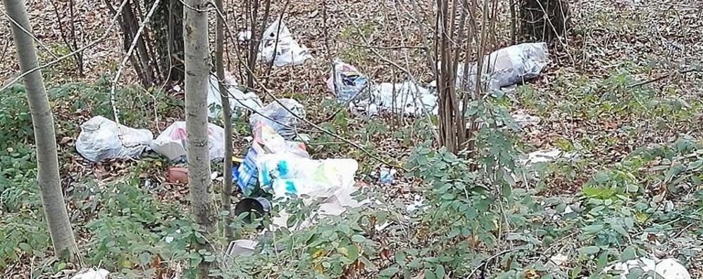 Una discarica dentro il bosco  Caccia aperta all'inquinatore