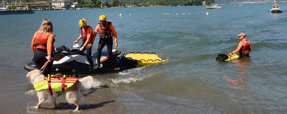 """Partita l'operazione """"Lario sicuro""""  In spiaggia i cani bagnino protagonisti"""