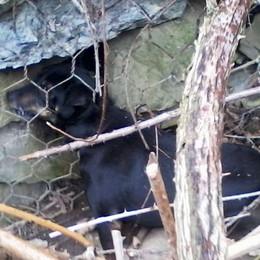 Castello: cane nelle reti salvato dopo quattro giorni