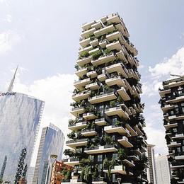 Lecco, un bosco verticale a Milano   Colombo costruisce il verde