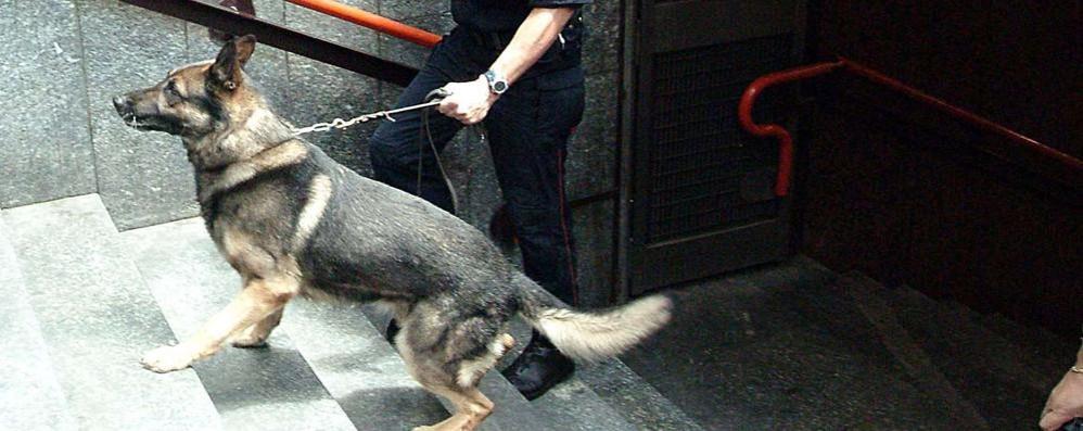 Operazione antidroga con i cani  Controlli a scuola e in stazione
