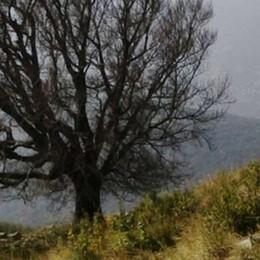 Raffiche a 114 km/h sul Cornizzolo  Sradicato il piantone