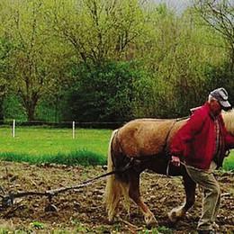 Il cavallo nei campi  «È un modo sano  per fare agricoltura»
