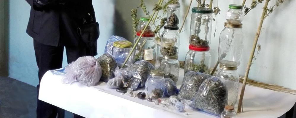 Marijuana e cannabis in casa  Arrestato uomo di Colico