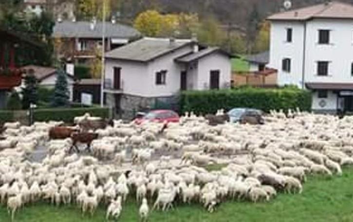 Sfila la transumanza, stagione finita  «L'allevamento ovino non sente la crisi»