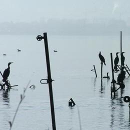 Cormorani da abbattere  In aula vincono i pescatori
