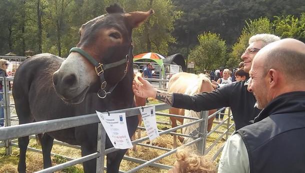 La sfida di Prato Buscante  «Vacche e cavalli, due mondi da unire»
