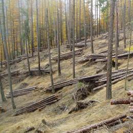 Le imprese del legno: «Fondamentali  le strade nei boschi»