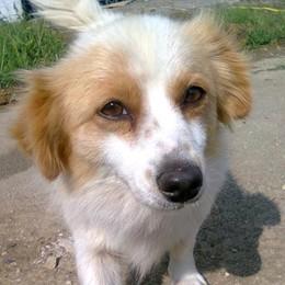 Allarme a Carate: «Un serial killer fa strage di cani»