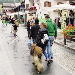 Livigno, troppe morsicate  Regole e aree verdi per cani