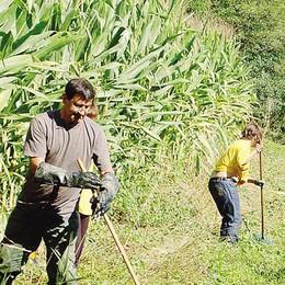 Montevecchia: «Puliamo noi  i vostri boschi abbandonati»