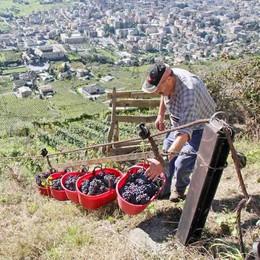 Vino: Italia batte Francia  Per qualità e quantità