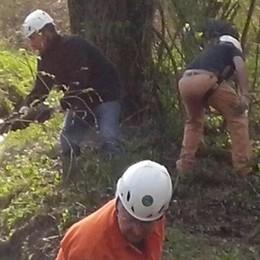 «Adotta un bosco» a Garbagnate  Legna in cambio della manutenzione