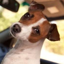 Il cane morì nell'automobile  Una multa da tremila euro