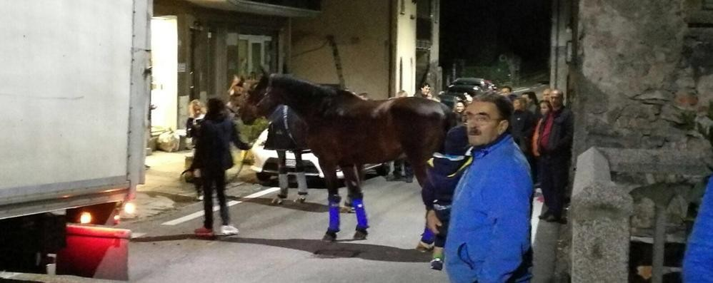 Il camion perde la ruota  Regina bloccata di notte  da otto cavalli da corsa