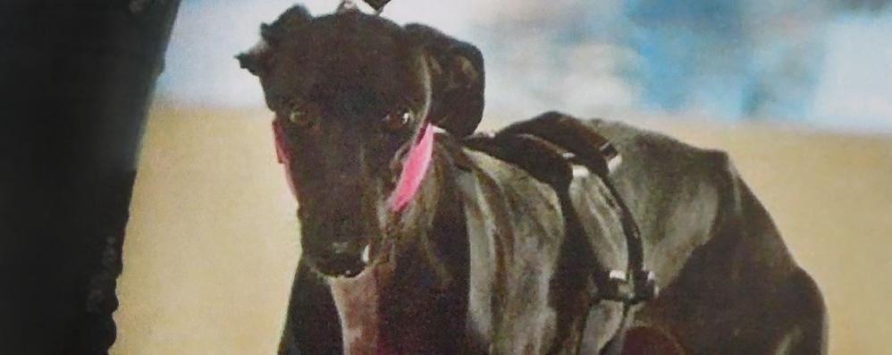 Inverigo, difende il proprio cane  Donna assalita da altri cinque