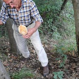 Anche quest'anno i funghi sono gratis  «Turismo da aiutare, niente tesserino»
