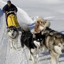 """C'è il """"Malamute day""""  Raduno degli Alaskan  di corsa ma senza neve"""