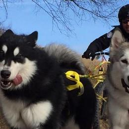 Tre giorni da cani  Malamute al Giumello  tra gare e solidarietà