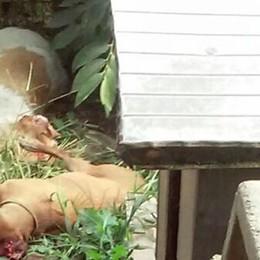 Strage impunita dei cani da caccia  Protezione animali: «Denuncia penale»
