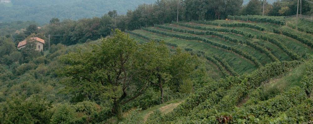 Consorzio Terre Lariane  «Annata promettente»