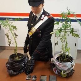 Carabinieri chiamati per una lite  In casa trovano piantine e droga
