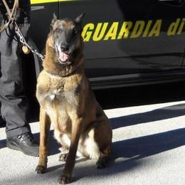 Lascia la droga sul bus  Incastrato dal cane della Gdf