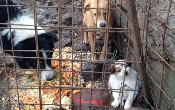 «Salvati tre cani maltrattati»  La replica: «Solo cattiverie»
