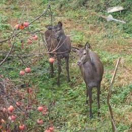 I cervi del parco trovano un padrone  Scongiurato il rischio del trasferimento