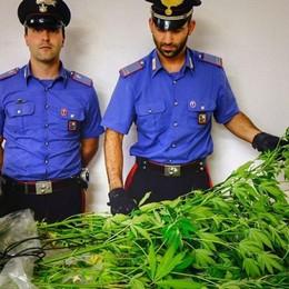 Marijuana nel bosco: blitz dei carabinieri e indagini a Tartano