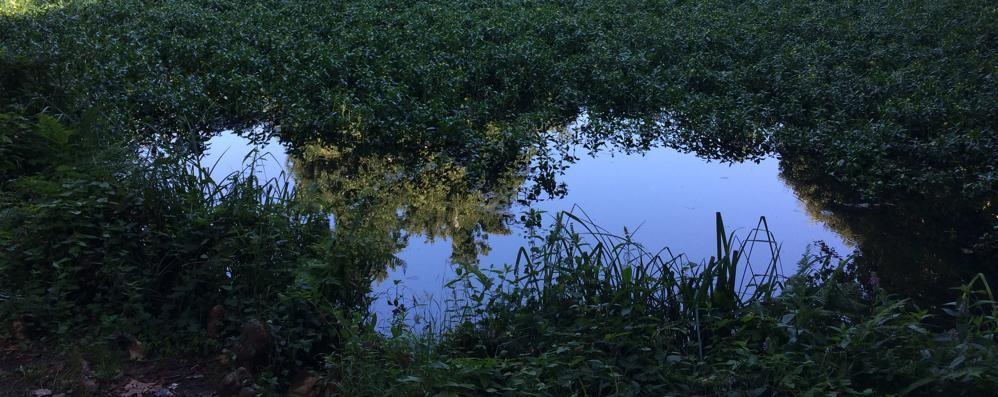 Il laghetto di San Rocco al Comune  Ma solo in comodato per 50 anni