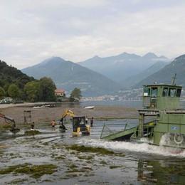 Colico, il battello spazzino ripulisce il lido  «Sommersi da una montagna di alghe»