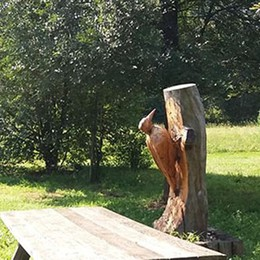 Il bosco diventa luogo di formazione  Studenti a lezione nel monte di Brianza