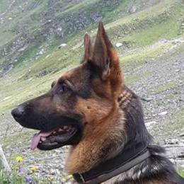 La terribile fine del cane Thor  «Il Pian di Spagna non è un'oasi»