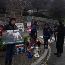 A Casargo l'ira degli animalisti  sulla mostra della capra orobica