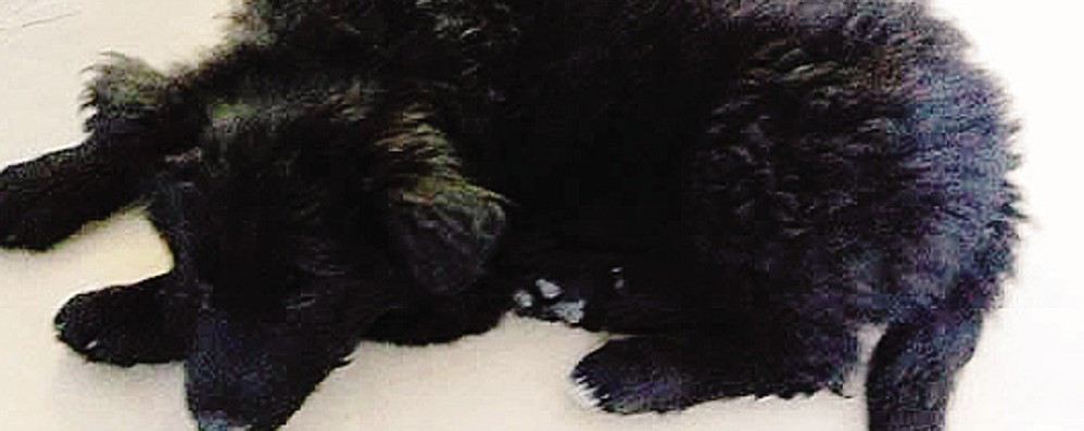 È stato abbandonato  lungo la provinciale  Salvato il cucciolo