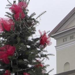 Erba, l'Albero dei Buoni Propositi cresce  Sabato si farà festa con i bambini