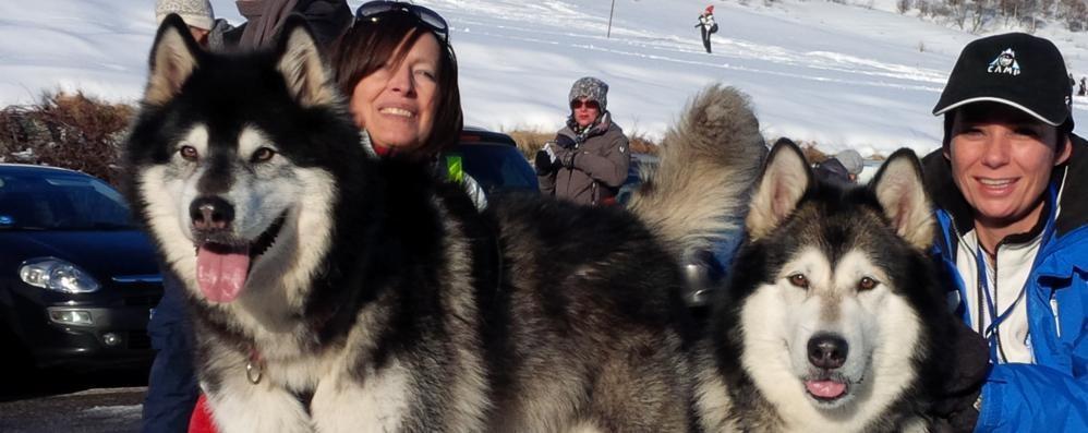 Arriva la carica dei cento malamute  Sul Giumello come sulle nevi dell'Alaska