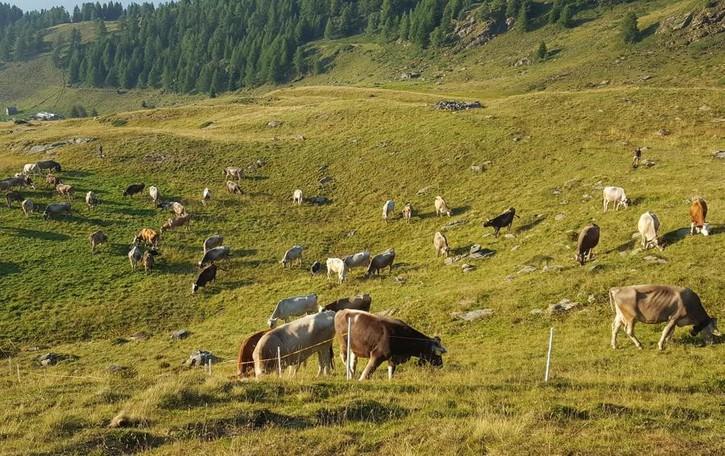 Dalle stalle agli alloggi dei contadini  Ecco i bandi per le imprese agricole