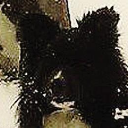 Cani uccisi, petizione  web  Raccolte più di mille firme