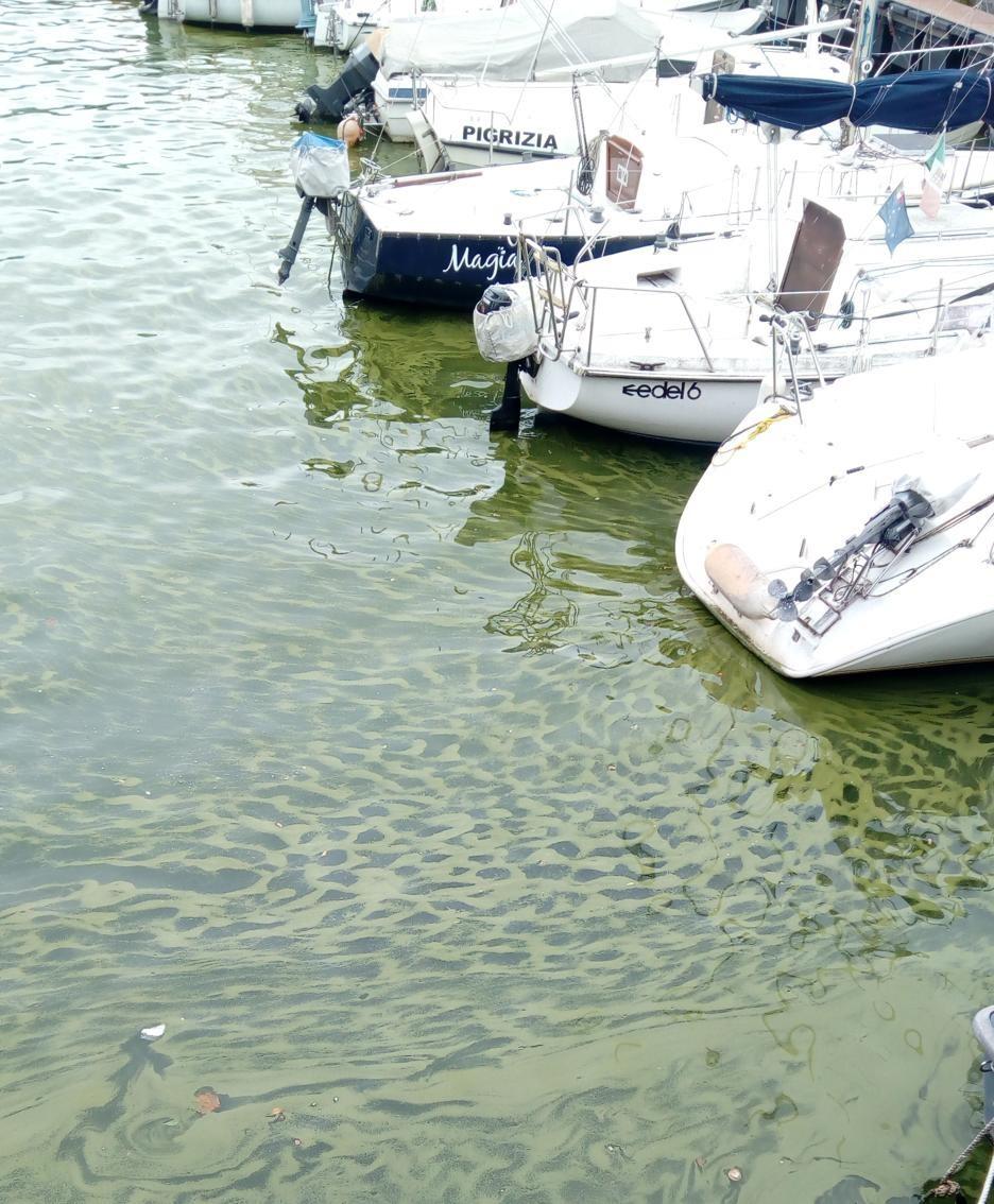 La fioritura delle alghe