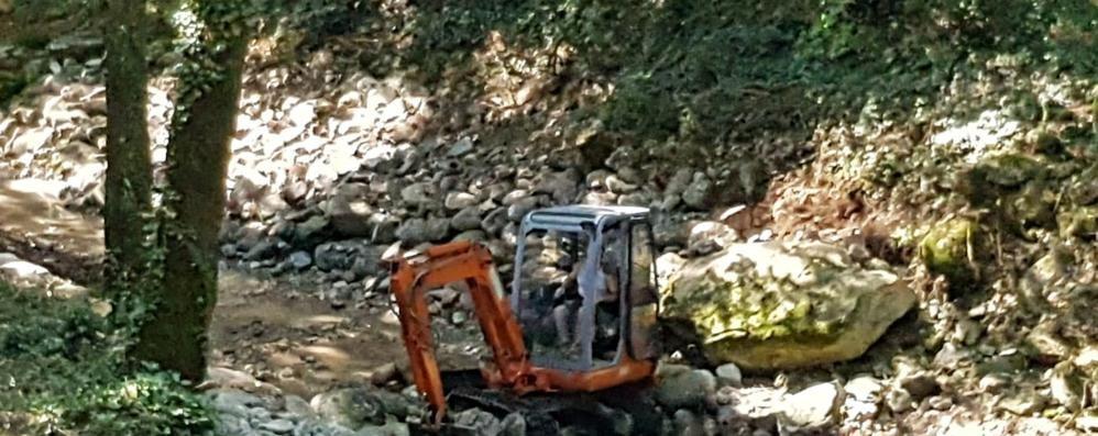 Ruspe per pulire  il torrente Bova  Trote e rane in salvo