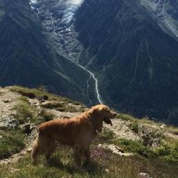 «Io e il mio cane, da soli sul Bianco»