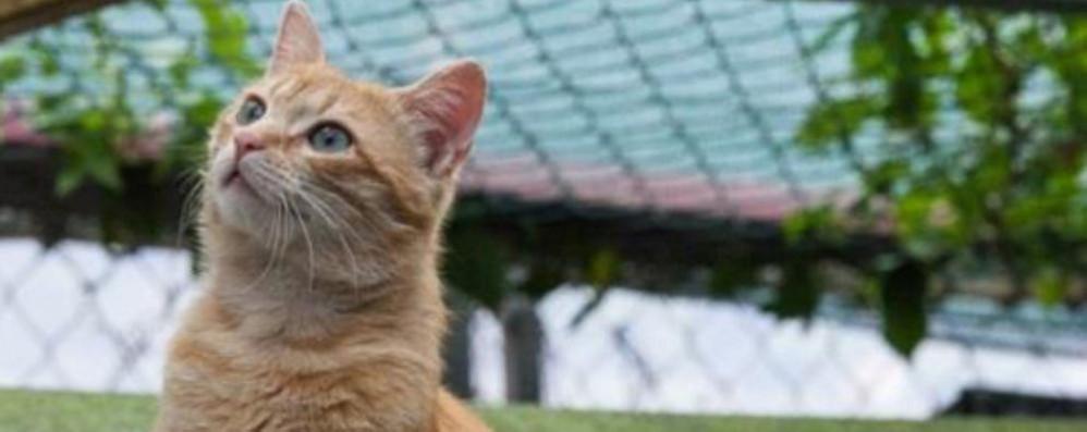 Sei cuccioli spariti o seviziati a morte  Indagata presunta serial killer dei gatti