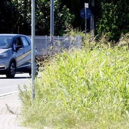 «La Provincia non falcia l'erba?  Vuol dire che lo farà il Comune»