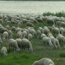 Pastori nomadi lungo l'Adda  Un milione di euro per aiutarli