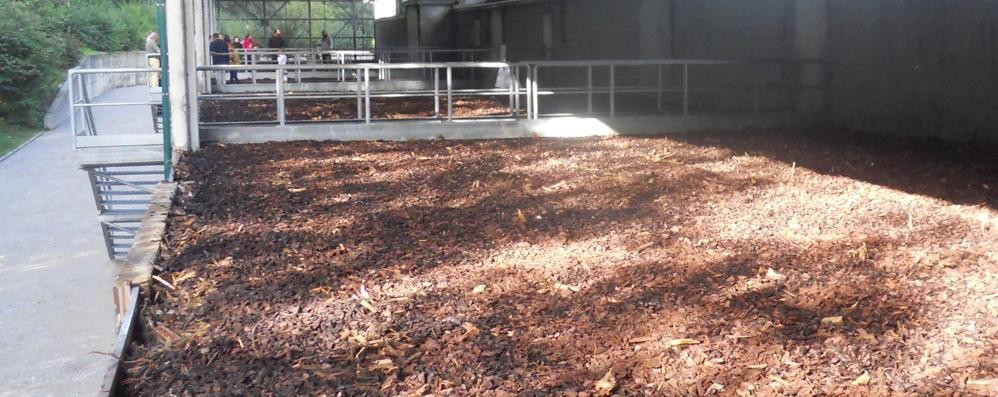 Annone: il biogas diventa una realtà L'aria sarà più pulita